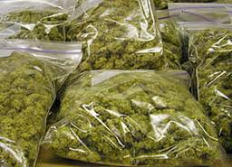 81 Pounds of Marijuana found in Checked Bags